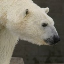 polarbear22