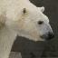 polarbear22