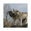 chemwolf