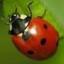ladybugg67