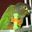 arniebird