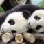 PandaTamer