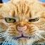 cathammer
