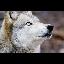 Wolfman123123