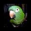 BlutoBird